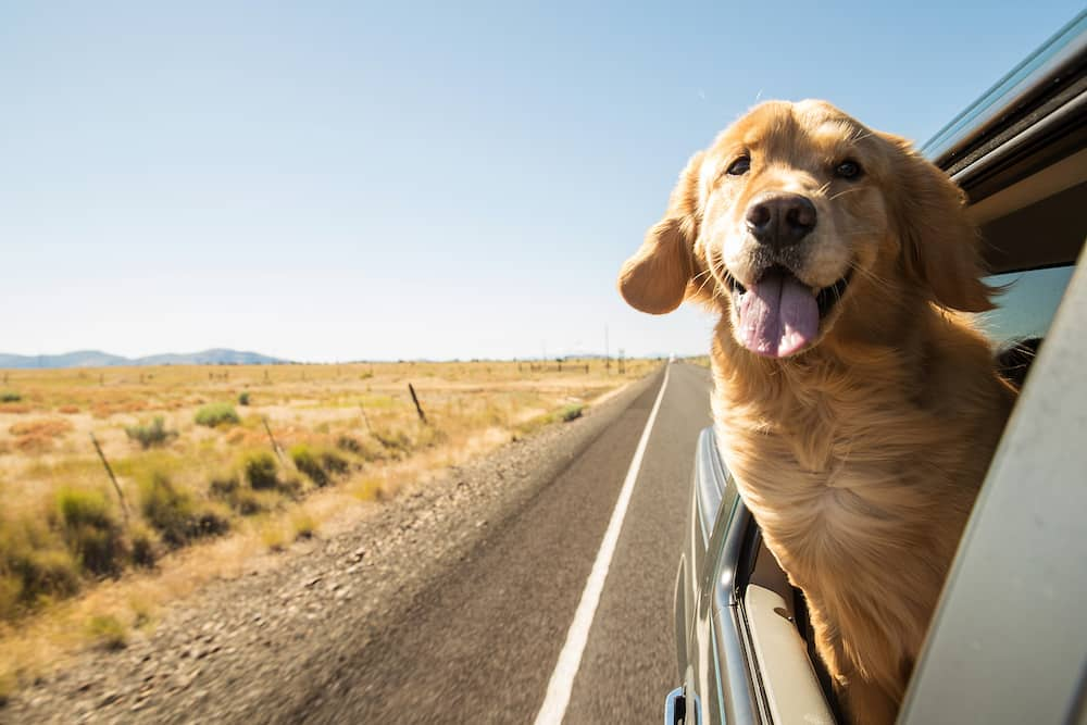 How to Make Sure Your Dog Doesn't Overheat in Your Car This Summer